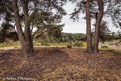 20180623-4343-Brunssummerheide-bw (Rob_Boon) Tags: brunssummerheide colefpro4 landschap robboon landscape limburg netherlands heath pine tree