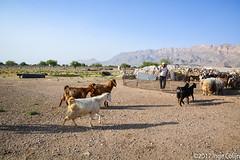 20180330-_DSC0170.jpg (drs.sarajevo) Tags: sarvestan ruraliran iran nomads farsprovince chamsatribe