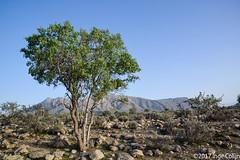 20180330-_DSC0221.jpg (drs.sarajevo) Tags: sarvestan ruraliran iran nomads farsprovince chamsatribe