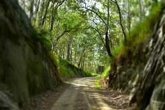 Boolboonda Tunnel [entrance] (Dreaming of the Sea) Tags: 7dayswithflickr 7dwf tamronsp2470mmf28divcusd nikond7200 trees greengrass greenleaves sky dirtroad cave tunnel boolboondatunnel mtperry queensland australia ferns gumtrees landscape