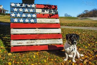 Patriotic Puppy Dog - Hope