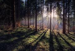 Herbstwald im Gegenlicht (Markus1224) Tags: wald forest gegenlicht backlight sunset sunray sunrays sonne sonnenstrahlen schwäbische alb germany deutschland nikon d750 light licht tree bäume gras green grün herbst shadow