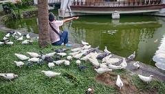 召喚 - 屋頂上的鴿子 Summon - pigeons on the roof (葉 正道 Ben(busy)) Tags: 台中 台灣 台中公園 water 水 taichungˍpark taiwan park 公園 湖 lake 建築物 樹 building tree taichung pigeons 鴿子