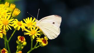 Butterfly - 5535