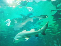 20180526_160845 (giltay) Tags: shark reflection