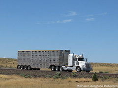 RWB Ranches Ltd. Peterbilt 567 IMG_9546 (Michael Cereghino (Avsfan118)) Tags: livestock hauler cattle truck bullwagon bull wagon rack peterbilt 567 pete model trucking rwb ranches ltd 4 axle quad tridrive tri drive transportation