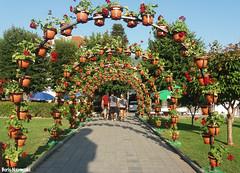 Floral tunnel (borisnaumoski) Tags: ohird macedonia flowers summer july promenade