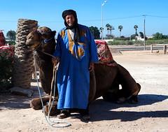 Do you want to ride a dromedary? (KPPG) Tags: dromedar fauna 7dwf animal berber morocco marokko afrika tier