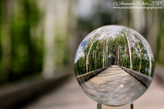 Balling on the Boardwalk (sminky_pinky100 (In and Out)) Tags: lensball lensballphotography glassball boardwalk sackvillenewbrunswick canada trees travel tourism outdoors scenic atlanticcanada maritimeprovinces cans2s omot landscape sackvillewaterfowlpark bokeh