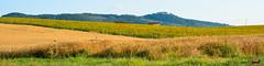 A-LUR_6406 (OrNeSsInA) Tags: panicale paciano trasimeno umbria italia italy natura panorami landescape