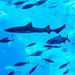 At Enoshima Aquarium, Fujisawa : 新江ノ島水族館にて(藤沢市)
