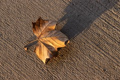 La última hoja (Ce Rey) Tags: texture textura leaves hoja hojaseca cemento luz light shadow sombra closeup piso suelo leaf 7dwf fcgiconwinner