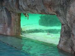 IMG_4642 (Man O' World) Tags: baha mar nassau bahamas beach turtle resort