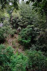 ATR20180526-1441_0989 (Alexey Trenikhin) Tags: outdooractivities treesandbushes theforestofnisenemarkssp parks nature plants places activities hiking people stateparks stockcategories 180550mmf2840