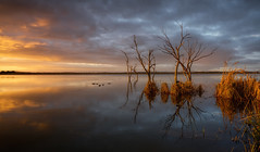 Glittering Prize (Emerald Imaging Photography) Tags: lake lakewyangan lakewyangangriffith nsw newsouthwales australia australian australianlandscape australianbush water sunrise clouds grass wetlands birds reflections reflection griffith griffithnsw griffithnewsouthwales trees treesinwater