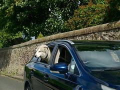 EM10 2018 06 18 (Sibokk) Tags: beasts camera digital em10 olympus otr photography scotland street uk urban edinburgh