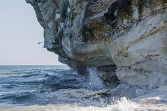 Bird cliff (AstridWestvang) Tags: bulbjerg coast denmark rock sea jutland