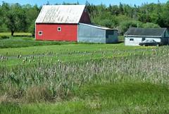 Rural bliss (halifaxlight) Tags: canada novascotia southshore rosebay house barn car rural filed cattails trees summer red green