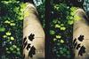 Wytham woods sycamore sunlight (alanpods) Tags: fujifilm nature tree sunlight film olympus penft halfframe c200
