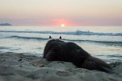 25/52 Leia & Batman (shila009) Tags: perro dog leia roughcollie dogphotography portrait summer verano amanecer dawn sea sand beach light luces sol batman