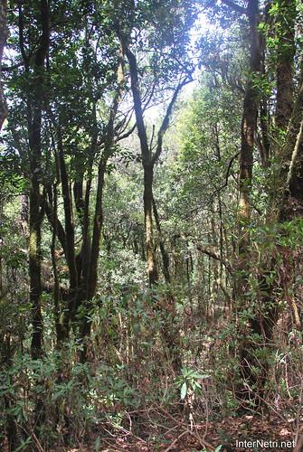 Національний парк Гарахонай, Гомера, Канарські острови  InterNetri  0719