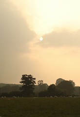 Summertime in Somerset (EmPhoto.) Tags: emmiejgee landscapepassion uk summer hazy canon80d canon24105mm selworthy exmoor rural
