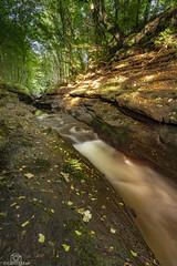 The Cutting (CamraMan.) Tags: cutting geltwoods rivergelt cumbria canon1740mmlusm sonya7 nature trees ©davidliddle ©camraman fotodiox