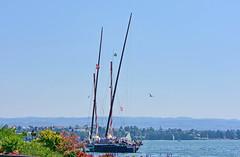 La Demoiselle (Diegojack) Tags: morges vaud suisse d7200 nikon nikonpassion demoiselle barque débarcadère voilelatine manifestation bateaux voiliers groupenuagesetciel