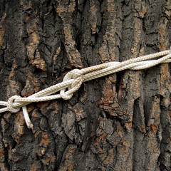 Узел без имени (unlucky_one) Tags: knot rope macro