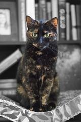 IMG_8797 (Desmojosh) Tags: canon eos m 50mm f18 new jersey mount laurel pets portrait