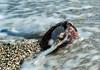 All Washed Up (tquist24) Tags: caribbean mermaidschair nikon nikond5300 stthomas usvirginislands virginislands beach coconut geotagged island nature ocean pebbles sand tropical water