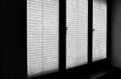 - - -  blinds - - - (christikren) Tags: austria abstract blackwhite bw christikren window blinds museum fenster light shadow wien kunstmuseum lines monochrome panasonic leica
