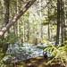 Tableau de printemps forestier