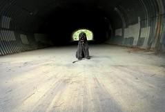 More than a Cliche (Bennilover) Tags: dog dogs tunnel light cliche labradoodle benni bennigirl love friend happy home 52weeksfordogs