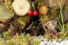 Garden mouse  (1) (Simon Dell Photography) Tags: sheffield simon dell tog photography s12 uk england old english countryside wildlife nature summer birds animals cute garden mouse log pile mossy moss wild funny awesome home house door fairy borrower hobbit