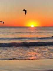 sunrise 18/7/2018 Mooloolaba (Jeannine DW) Tags: beach sand surf sunrise australia birds waves