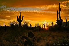 Saguaro Golden Hour (Stuart Schaefer Photography) Tags: arizona outdoor outdoors tucson dusk landscape sonya7m3 sunset clouds cactus goldenhour silhouette sunburst sun