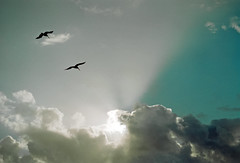 Birds Flying High (macromary) Tags: leicaflexsl leica leitz leicaflex slr primelens vintage camera manual film 35mmfilm filmcamera vintagecamera vintagelens oldglass mechanicalcamera analog availablelight analogphoto florida fl agfavista agfavista200 color colour colorfilm colourfilm 35mm 35mmcolorfilm sl 50mm summicron 50mmsummicron hypoluxo palmbeachcounty pelicans goldenhour sky crepuscularrays sun rays sunrays clouds birds