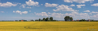 Panorama wheat field and clouds