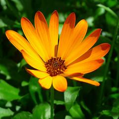 P1040805-1 (G'kar.) Tags: panasonictz15 begonias flowers gardensbythebay singapore flowerdome