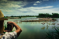 flamingos en la Camarga (juan luis olaeta) Tags: paisajes landscape nature naturaleza canoneos60d photoshop lhigtroom sigma1020