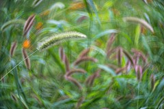 Summer grasses (kymarto) Tags: bokeh bokehlicious bokehphotography dof depthoffield flowers flowerphotography nature naturephotography beauty beautiful sony sonyphotography sonya7r2 oldlens vintagelens summer grass