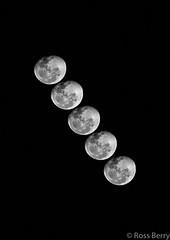 Quintet de Luna (rossmberry) Tags: moon hawkesbay multipleimage