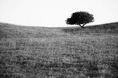 (tohlfer) Tags: southdakota southdakotaart southdakotablackandwhite art blackandwhite blackandwhitelandscape canon canon5dmarkii dakota eastriver grass landscape mkii paulpeterson prairie rural rurallandscape trees
