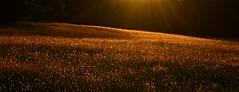 2018_0709Beams-Above-The-Field0001 (maineman152 (Lou)) Tags: sunbeams rays field light nature naturephoto naturephotography july maine