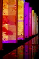 Art Aquarium 2018 (keiko*has) Tags: 7dwf monday artaquarium2018 tokyo アートアクアリウム2018 日本橋 金魚の涼