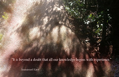 Immanuel Kant quotes (B0CK) Tags: immanuelkant quotes experience shadow quotation trees text thought knowledge words
