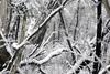 Brindabella Snow 0010 (BrianRope) Tags: brindabellas brindabellaroad cotterriver namadginationalpark snow brindabella nsw australia