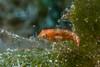 Not sure what this little guy is... (jonmcclintock) Tags: underwater diving caymanbrac adventure caymanislands scuba travel caribbean