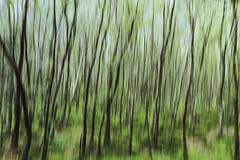 ... a walk in the woods ... (jane64pics) Tags: abstract glendalough woods trees ilovetrees icm incameramovement janefriel janefriel2018 wicklow wicklowhills wicklowway cowicklow colours green greenery